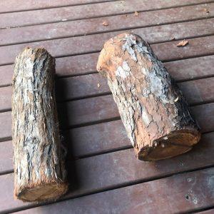 logs 2 - Three Dogs AU