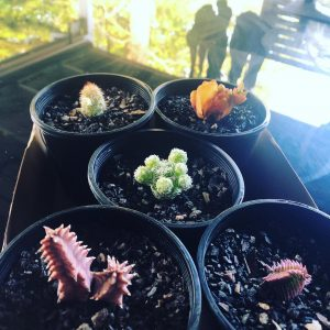 succulent collection - Three Dogs AU