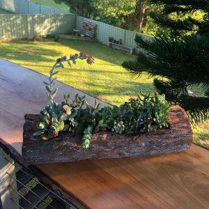 succulent log 1 - Three Dogs AU