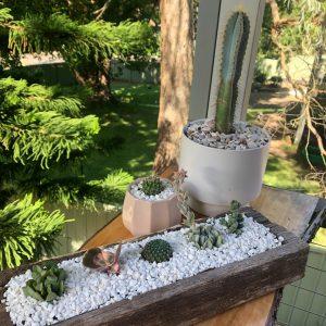 succulent logs white pebbles 2 - Three Dogs AU