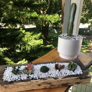 succulent logs white pebbles - Three Dogs AU