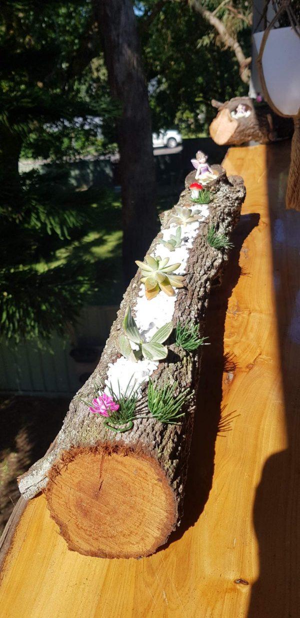 secret fairy garden succulents - Three Dogs AU