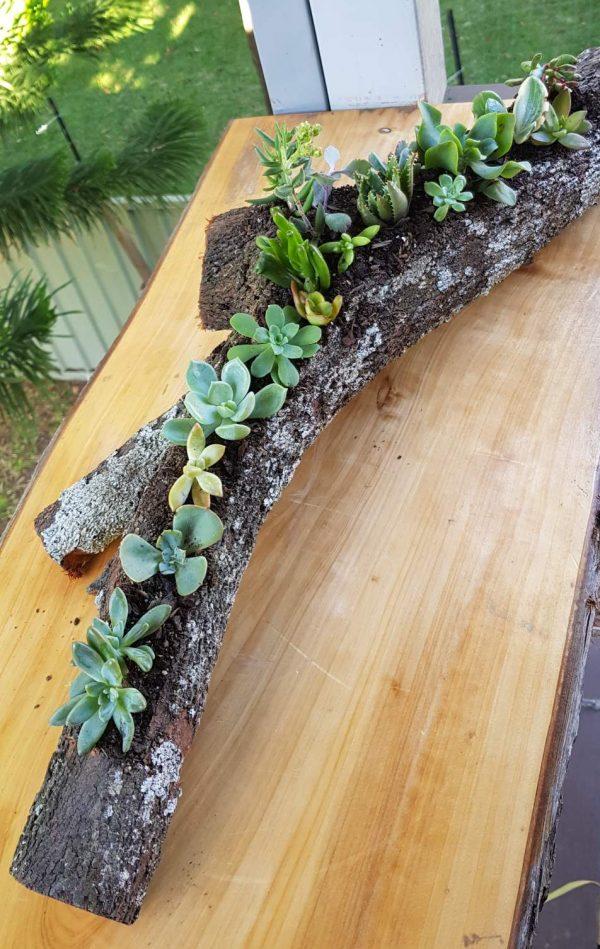 succulent log fork - Three Dogs AU
