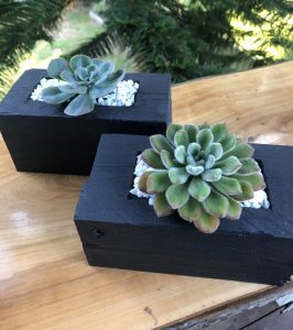 succulent box - by Three Dogs AU