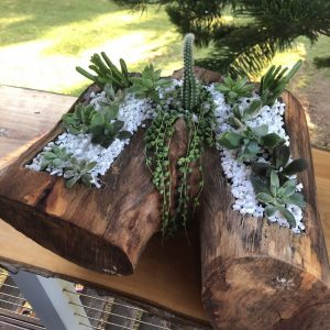 succulent log with a twist - by Three Dogs AU