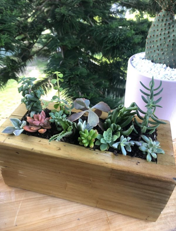 succulent box small - by Three Dogs AU