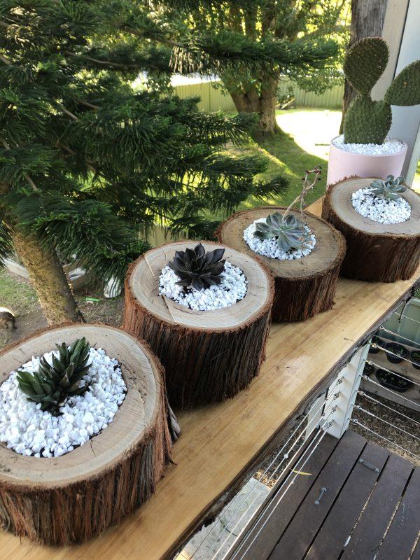 succulent log horizontal - Three Dogs Australia